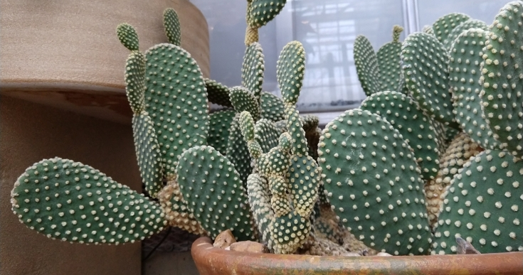 Cacti at the Gardens