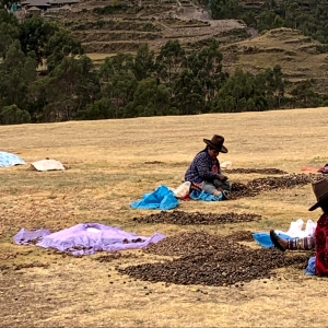 A Peruvian potato farmer