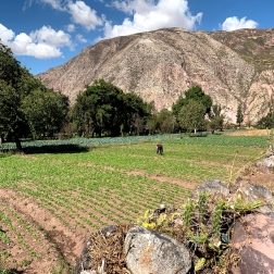 Peruvian Sacred Valley Farmer